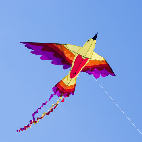 http://drake.nu/product/eldsfågeln-drake-bird-drachen-fire-kite-obs-lev-först-i-juni